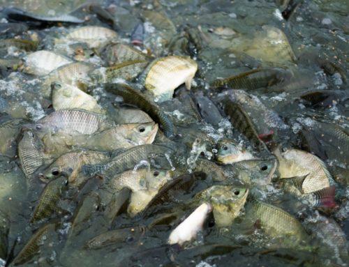 Tag des Fisches