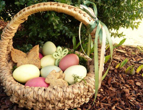 Der Blick ins Osternest – rund ums Ei und Eiersatz